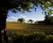The Economy Art - Ploughed Field, Potato Field, Ireland by The Irish Image Collection