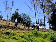 Colonial Man Photos - Ploughing With Oxen in Ecuador by Al Bourassa