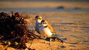 Catherine Natalia  Roche - Plover Boys