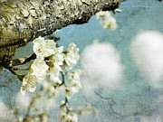 Puffy Prints - Plum blossoms and puffy clouds Print by Cindy Garber Iverson