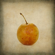 Fresh Food Digital Art Prints - Plum vintage look Print by Bernard Jaubert