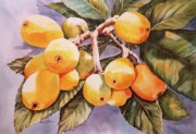 Plumbs Prints - Plumb Juicy Print by Roxanne Tobaison