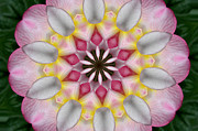 Kaleidoscope Photos - Plumeria 3 by Mark Gilman