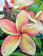Plumeria Paintings - Plumeria by Jerri Grindle