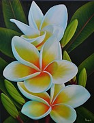 Paula L - Plumeria