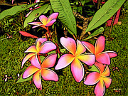 Korpita Photo Framed Prints - Plumeria Framed Print by Rebecca Korpita