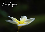 Thank You Card Prints - Plumeria Thank you card Print by Dan McManus