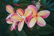Plumeria Paintings - Plumeria Trio by Tina  Sander