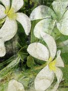 Botanical Art Mixed Media - Plumier by Kaypee Soh - Printscapes