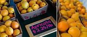 Apricots Posters - Plump Poster by Rebecca Cozart