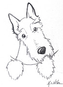 Kim Drawings Framed Prints - Pocket Scottie Sketch Framed Print by Kim Niles