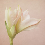 Poetic Prints - Poetical Bloom Print by Iris Lehnhardt