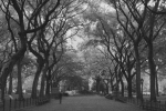 New York Framed Prints - Poets Walk In Central Park Framed Print by Christopher Kirby