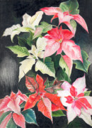 Poinsettias Paintings - Poinsettias by Penrith Goff