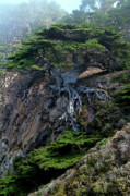 Featured Photos - Point Lobos Veteran Cypress Tree by Charlene Mitchell