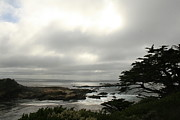 Point Lobos View Print by Suzanne Lorenz