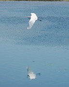 Sheila Price - Point Mugu Great Egret...