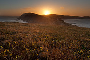 Point Reyes Framed Prints - Point Reyes on a Summer Evening Framed Print by Matt Tilghman
