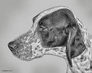 Canine Digital Art - Pointer by Larry Linton