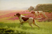 Hounds Painting Framed Prints - Pointers in a Landscape Framed Print by Harrington Bird