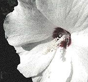 Pointillized Althea Flower Print by Renee Trenholm