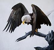 Eagle Pastels Metal Prints - Poised Metal Print by David Vincenzi