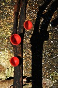 Vinod Nair Metal Prints - Poison Mushroom Metal Print by Vinod Nair