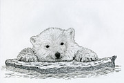 Global Drawings - Polar Bear Cub by Chris Trudeau