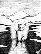 Polar Drawings Prints - Polar Bear Print by Wendy Keely