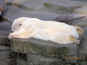Carolyn Donnell - Polar Nap