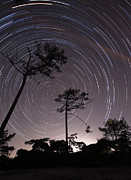 Bare Trees Posters - Polar Star Trails Circle Poster by Miguel Claro
