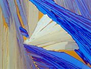 Compounds Posters - Polarised Lm Of Acenaphthene Crystals Poster by Sinclair Stammers