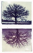 Polaroid Transfer Prints - Polaroid Transfer Tree Print by Jane Linders