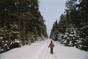 Fir Trees Posters - Polish Child Walking On A Snowy Road Poster by Raymond Gehman