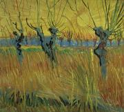 Arles Painting Framed Prints - Pollarded Willows and Setting Sun Framed Print by Vincent Van Gogh