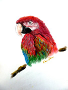 Macaw Pastels - Polly by Karin Best