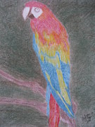Bird Pastels - Polly Parrot by Helga Oliveira