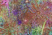 4th July Digital Art - Polychromatic Jungle by Gregory Scott