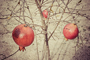 Rufat Abas - Pomegranate