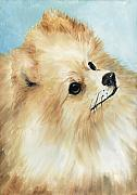 Akc Painting Framed Prints - Pomeranian Framed Print by Charlotte Yealey