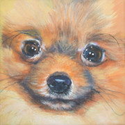 Pomeranian Framed Prints - Pomeranian Close up Framed Print by Lee Ann Shepard