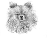 Jim Hubbard Prints - Pomeranian Print by Jim Hubbard