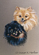 Pair Pastels Framed Prints - Pomeranian Pair Framed Print by Susan Herber