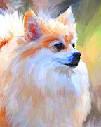 Pomeranian Framed Prints - Pomeranian Portrait Framed Print by Jai Johnson