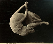 Natural Disaster Photos - Pompeii: Plaster Cast by Granger