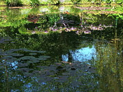 Eure Metal Prints - Pond at Giverny2 Metal Print by Danny Cieloha