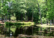 Pond In Park Prints - Pond At Lee State Park - Sc Print by Kathleen Palermo