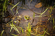 Jared Theberge - Pond Frog