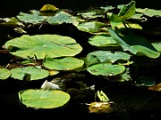 Eve Paludan - Pond Lily Pads in Full...