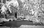 Winter Photos - Pond Mystere by Mike Reid